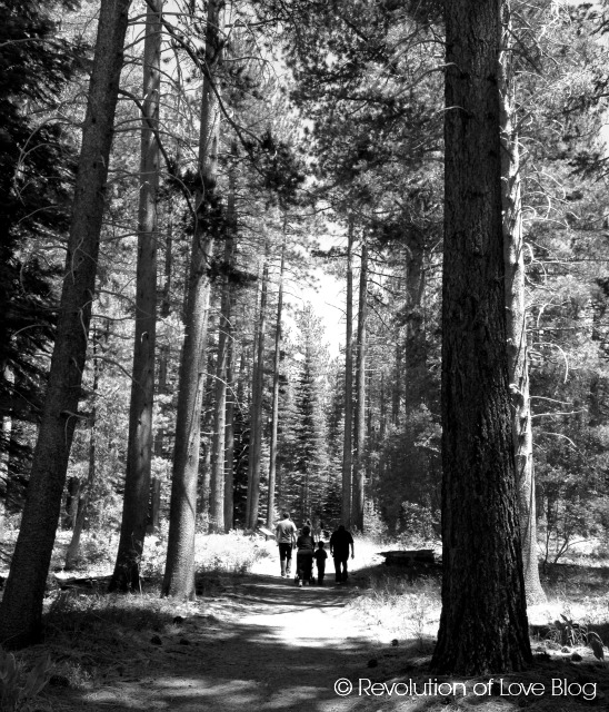 © Revolution of Love Blog - South Lake Tahoe, bw_tree_3