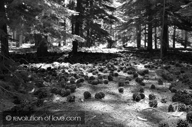revolution of love - tahoe_cones