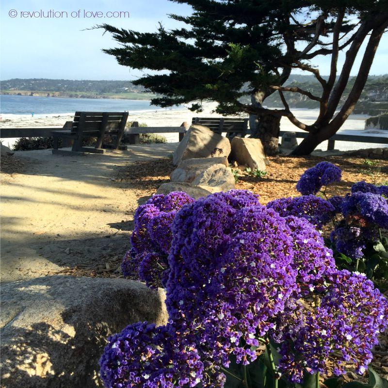 Revolution of Love - cwa_beach_purple