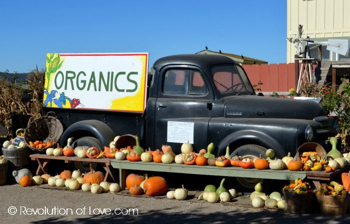 RevolutionofLove.com - The Farm in Salinas, CA(31_days15_day22C)